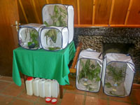 Net cages to keep insects alive during expeditions.