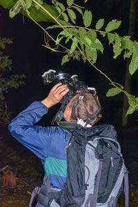 Frank Hennemann collecting during night in Panama, 2018.